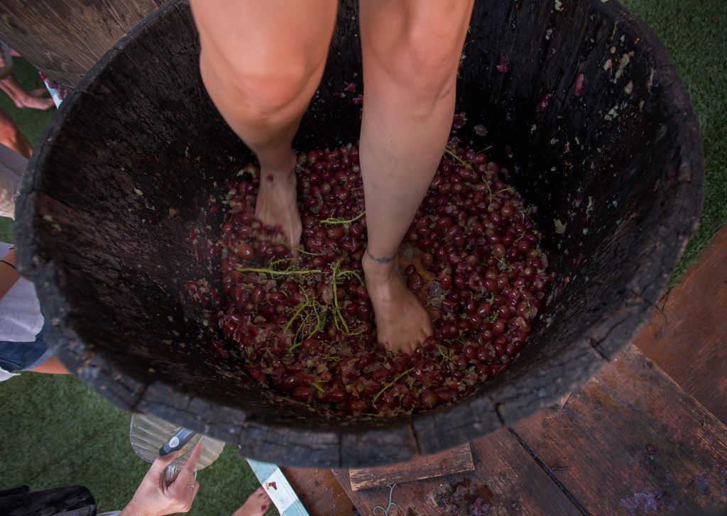 GrapeStomp contests are a tradition at Grapefest, which runs Sept. 12-15.
