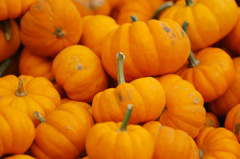 """Gary and I always loved the sounds of certain words; among them, """"pumpkin."""""""