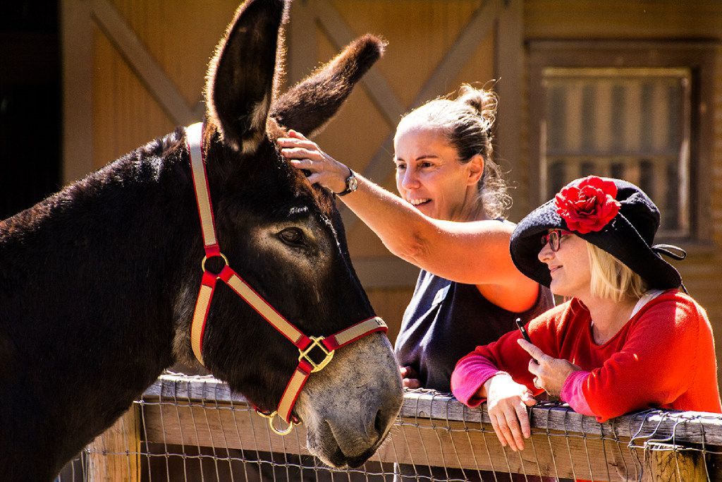 Willie is one of Dallas Heritage Village's new donkeys.