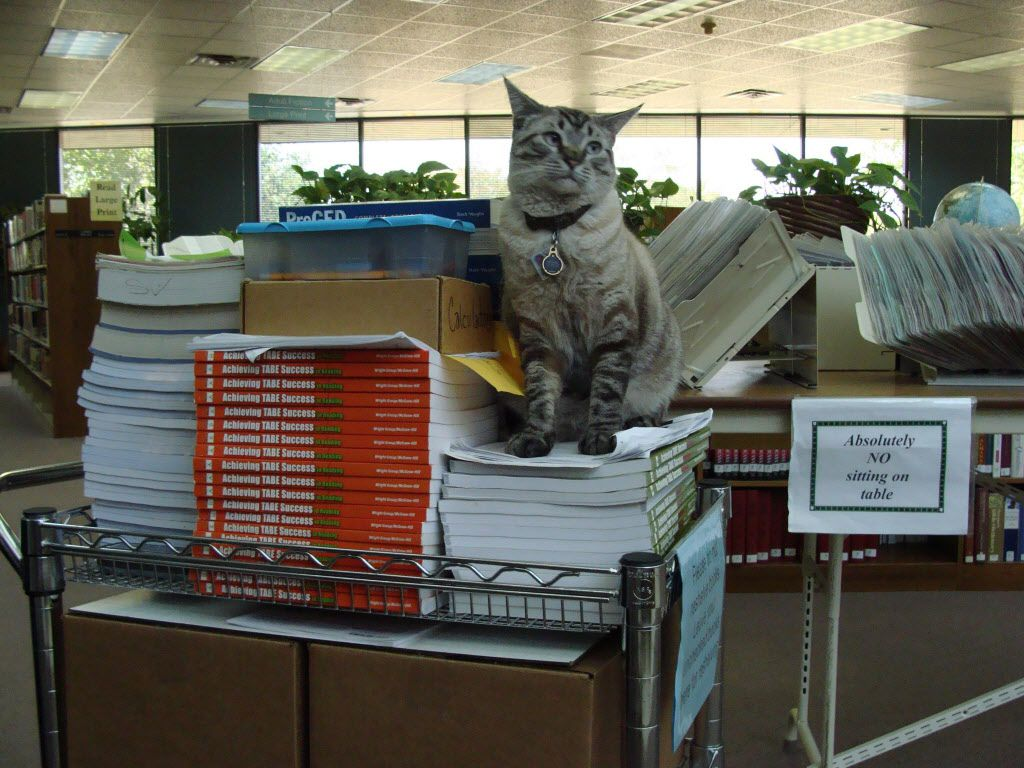 Browser, a Texas library cat, has been ousted from his position by the city council. MUST CREDIT: White Settlement Public Library