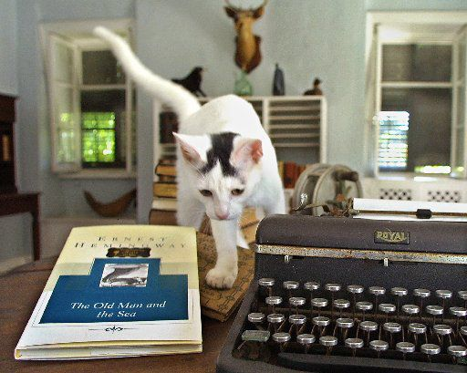 """Patches, one of the in residence at the Ernest Hemingway Home & Museum in Key West, Fla., prowls through the late author's writing room in  July 13, 2002 file photo, between Hemingway's typewriter and his classic, """"The Old Man and the Sea."""""""