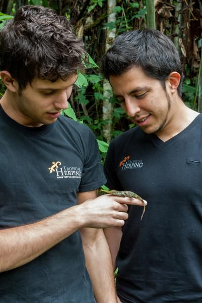 Biologist Alejandro Arteaga admires a Pinocchio lizard, a species which he and his colleagues re-discovered in 2013 in the Mindo Valley in Ecuador.