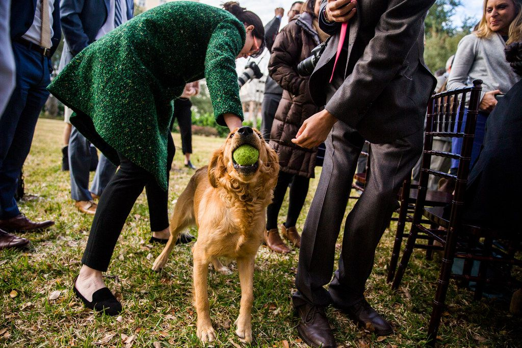 Reporters and photographers pet Peaches, one of the governor's dogs, after Governor Greg Abbott, Lt. Governor Dan Patrick and Speaker of the House Dennis Bonnen spoke at a press conference at the Governor's mansion on the second day of the 86th Texas legislature on Wednesday, January 9, 2019 in Austin, Texas.