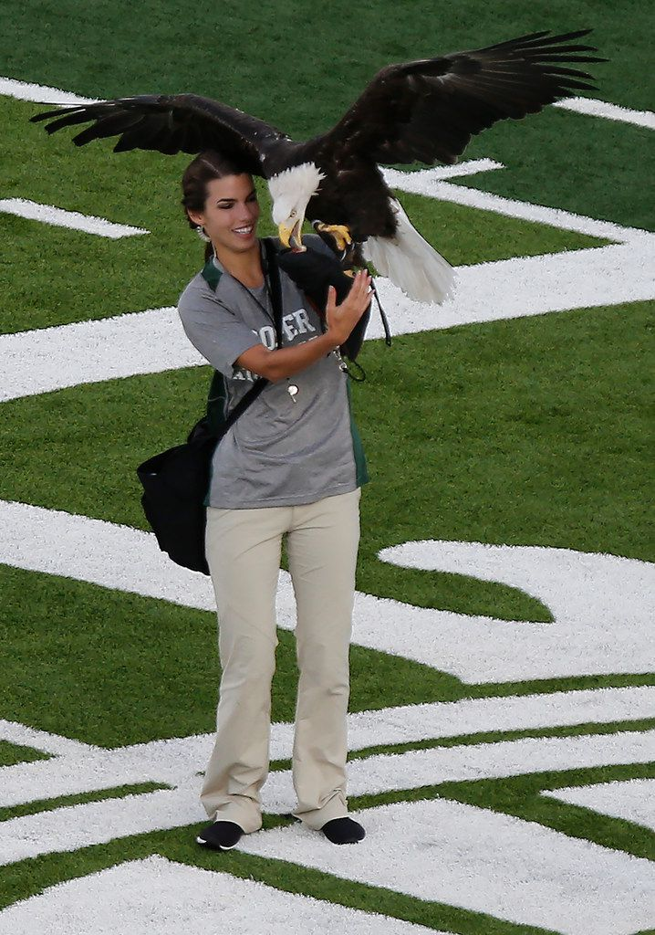 A live eagle made an appearance at midfield just before kickoff as Prosper High School hosted Rowlett High School in a non-district football game at Children's Health Stadium in Prosper on Friday, August 30, 2019. (Stewart F. House/Special Contributor)