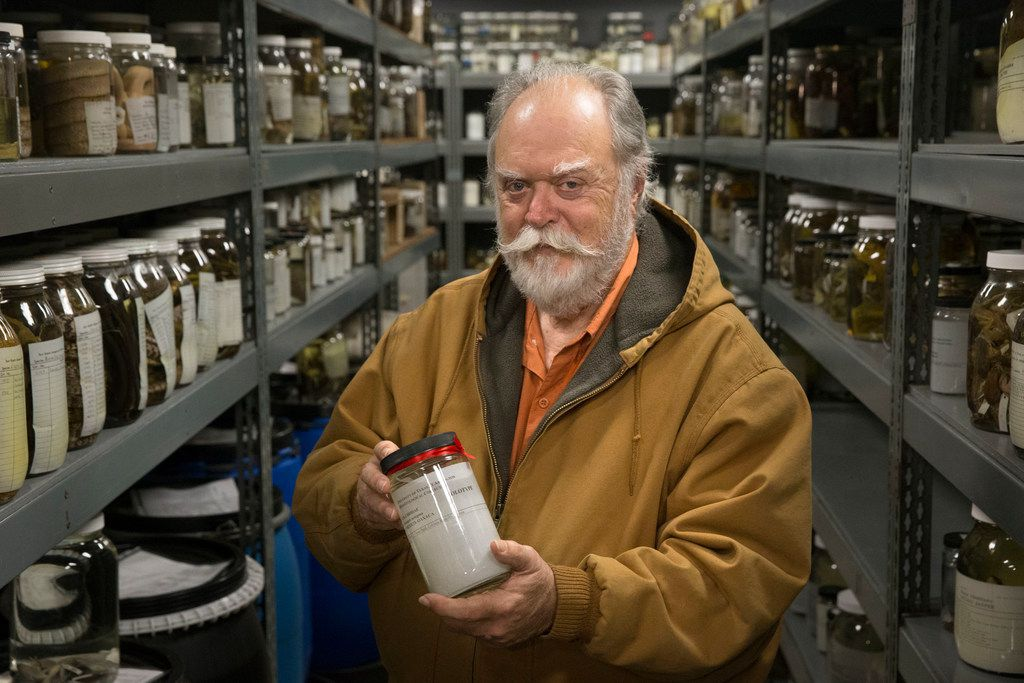 """Jonathan Campbell, a biology professor at the University of Texas at Arlington, holds a jar containing a Cenaspis aenigma snake at the Amphibian and Reptile Diversity Research Center in Arlington. Campbell discovered the Cenaspis aenigma, which translates to """"mystery dinner snake,"""" inside of a coral snake."""