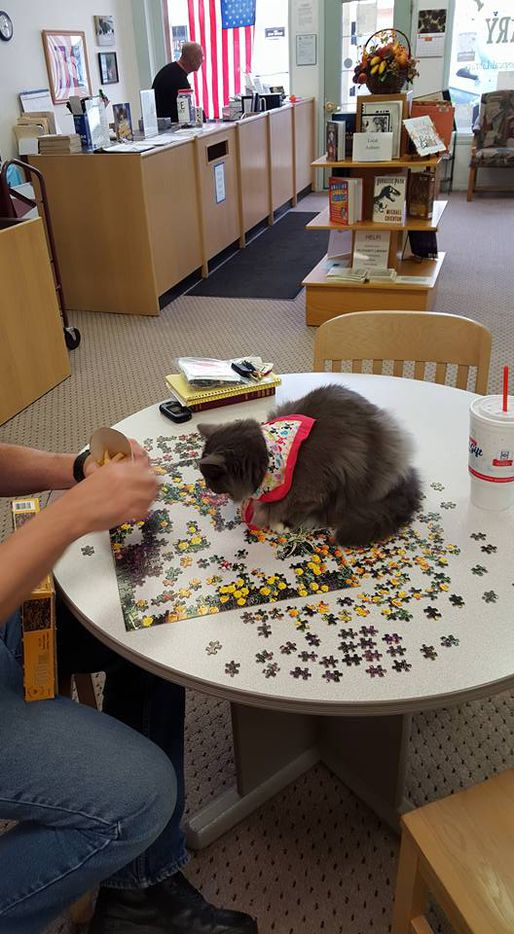 Whisper helps with a puzzle at the Tri-County Library