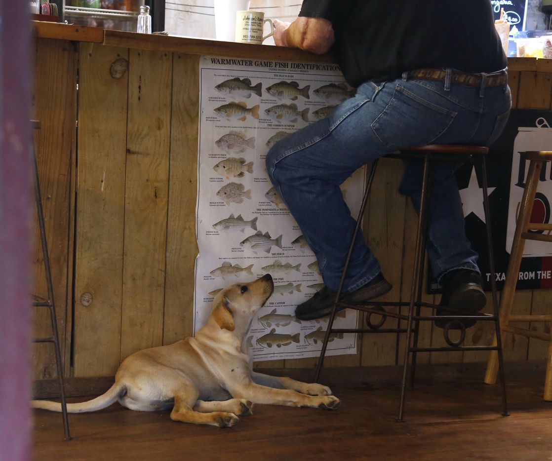 BoBo, John Booth's yellow lab pup, lies on the floor inside Johnson's Ranch hoping for a handout in Uncertain, Texas Tuesday June 19, 2018. Booth is the fish cleaner at the marina on Caddo Lake.