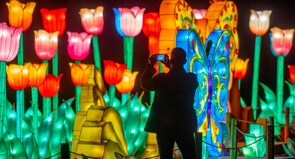 A man takes a photo of the Butterfly Paradise lanterns at the Lanterns in the Garden exhibit at the Fort Worth Botanic Gardens.