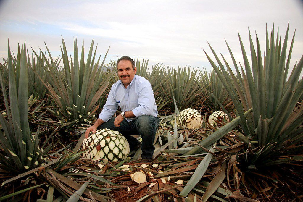 David Suro-Pinera, president of Suro Imports, a restaurateur and a tequila aficionado, kneels amid agave plants in Mexico.