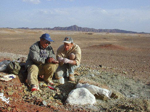 In this photo released by Project Exploration, Chinese dinosaur hunter Zhao Xijin (left) and University of Chicago professor Paul Sereno compare fossil bones at the site of a buried dinosaur herd in the Gobi Desert of Inner Mongolia, China, in May 2001.