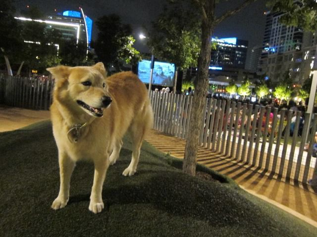 B.K. visited  the off-leash area during a previous screening at Klyde Warren Park.