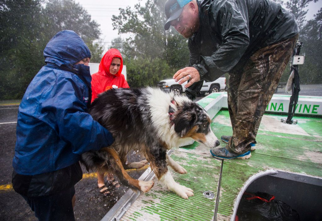 Averie and Sybrena Brakin help their dog, Dallas, on to an airboat driven by volunteers JV Bagley, right, and Erik Davis (not pictured) of Carthage, Texas, as they are taken to safety from rising waters as a result of Hurricane Harvey on Wednesday, August 30, 2017 in Lumberton, Texas. (Ashley Landis/The Dallas Morning News)