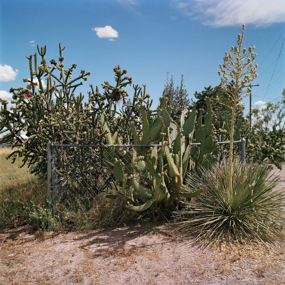 Allison V. Smith, Fenced In, July 2016, Marfa, chromogenic color photograph courtesy Allison V. Smith and Barry Whistler Gallery