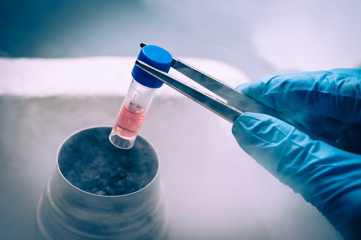 Las células madre no se pueden conseguir por medio de pastillas, inyecciones o cremas. (iSTOCK)
