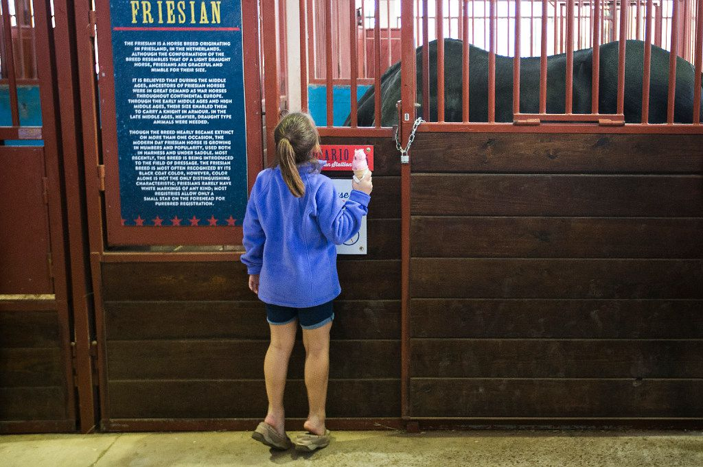 Katelynn Driver, 8, of Lancaster, Texas, stands on tiptoe to take a peek at a horse while eating an ice cream cone during the State Fair of Texas at Fair Park on Friday, Oct. 14, 2016, in Dallas. (Smiley N. Pool/The Dallas Morning News)