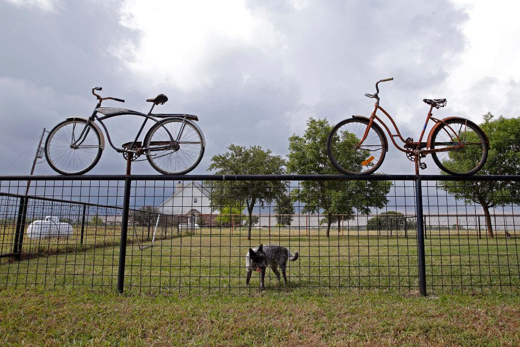 A fence at Golden Farms in Celina is decorated with bicycles.