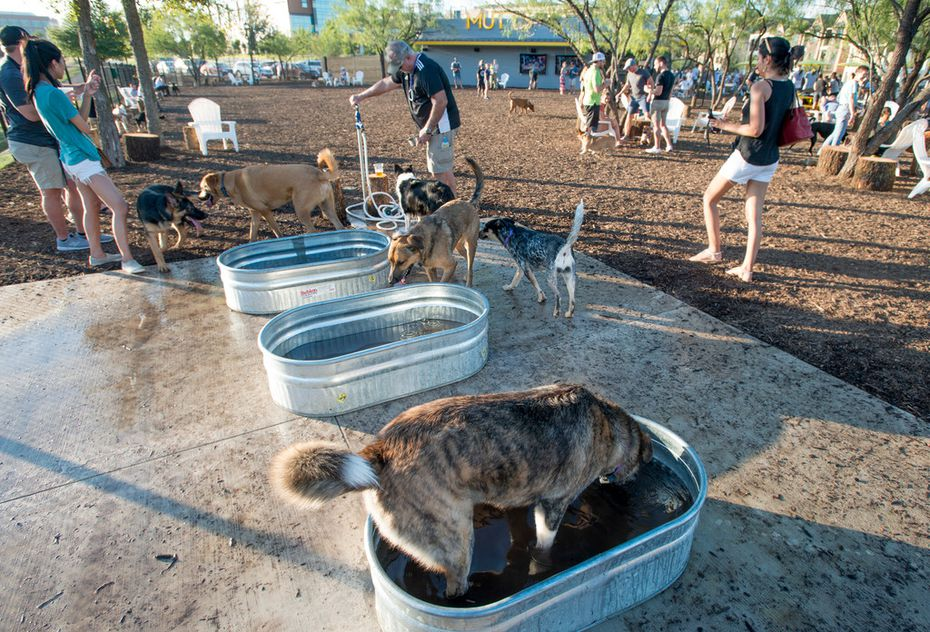 Dogs can hop in the water troughs at Mutts Canine Cantina.