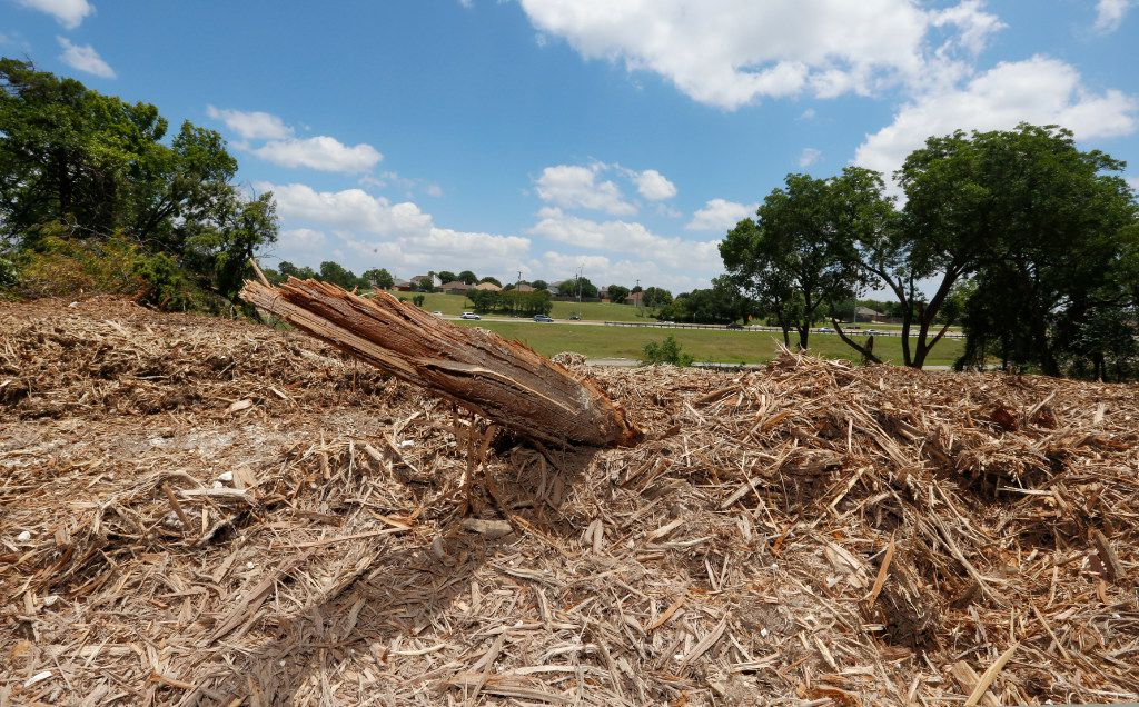 A broken branch sticks out from some mulch Monday June 12, 2017 after approximately 70 protected trees where knocked down by the owners of the property at the southeast corner of Highway 67 and Ledbetter Dr. in south Oak Cliff. The demolition of the trees was halted by the City of Dallas since the property owners did not have permission for the demolition. (Ron Baselice/The Dallas Morning News))