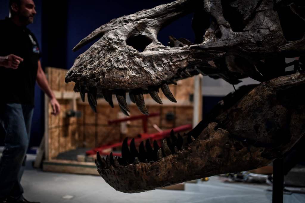 Un cráneo de un tiranosaurio está en medio de una disputa legal en Fort Worth. (AFP/GETTY IMAGES/STEPHANE DE SAKUTIN)