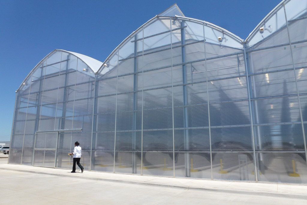 Eden Green greenhouse in Cleburne, where greens are grown in vertical towers.