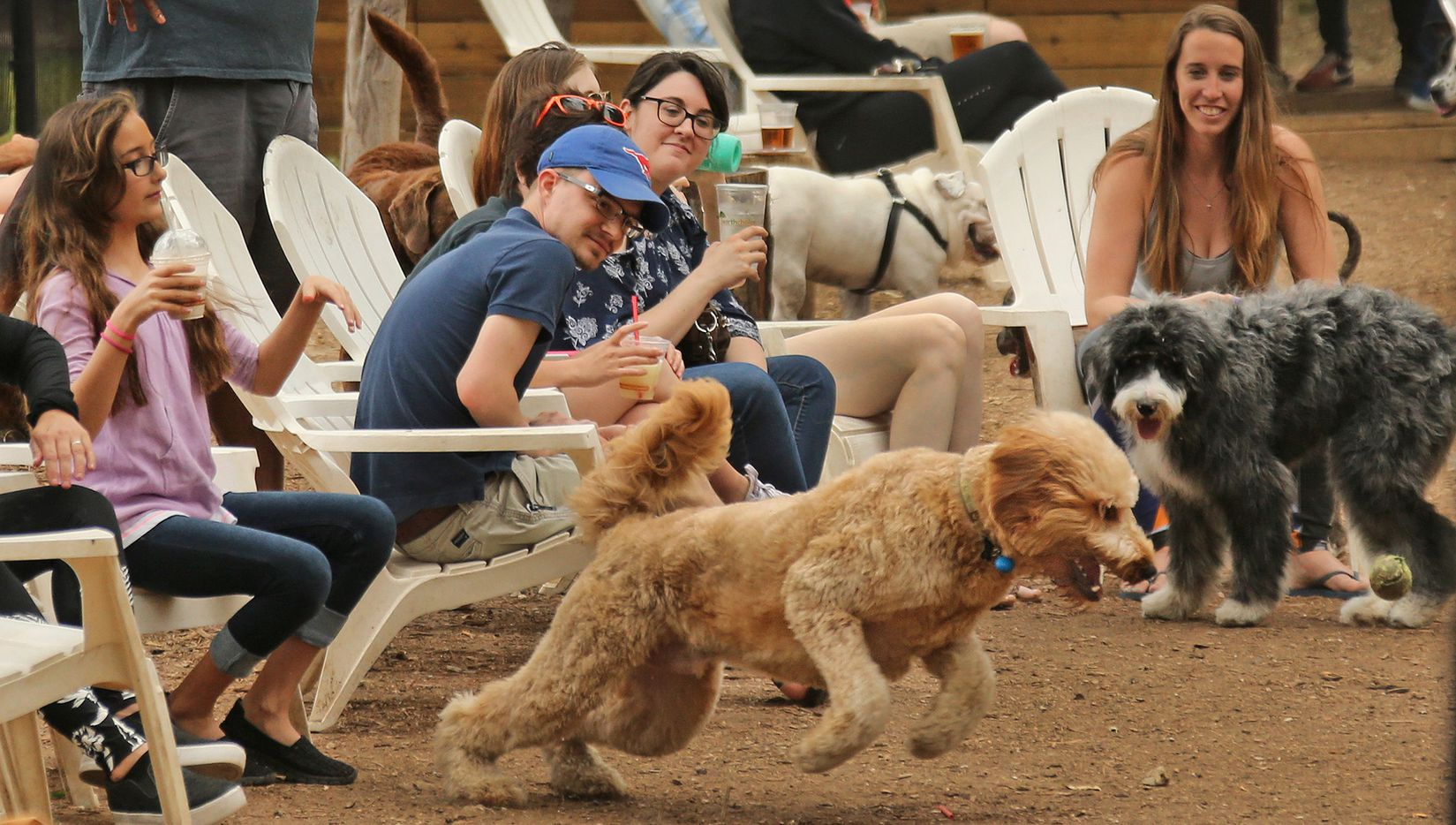 Dog owners relax as their pets play at Mutts Canine Cantina in Uptown just outside of downtown Dallas, photographed on Saturday, April 1, 2017.