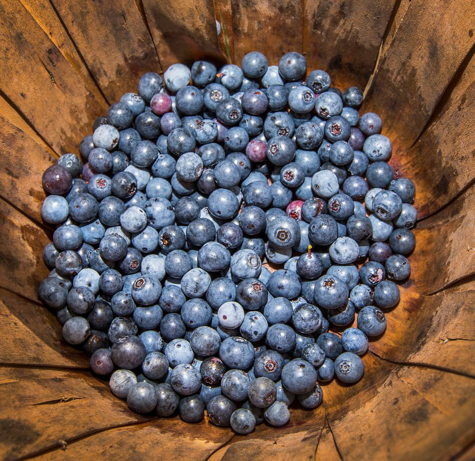 Freshly picked blueberries at Blueberry Hill Farms in Edom.