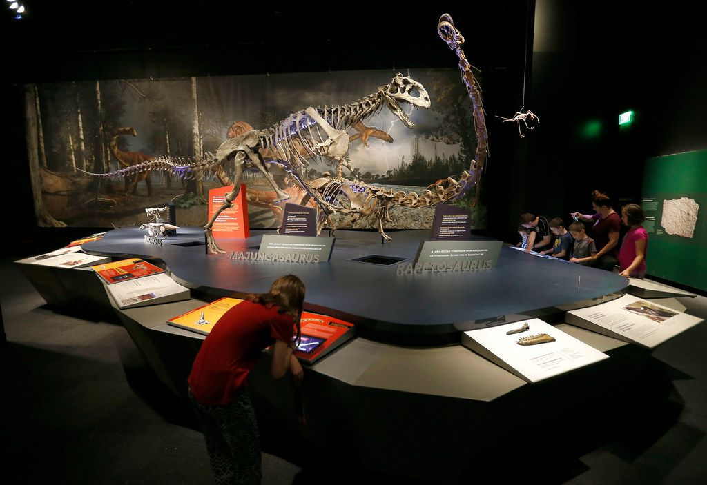 Visitors use interactive screens next to full-sized skeletons of dinosaur during a media preview of new dinosaur exhibit Ultimate Dinosaurs at Perot Museum of Nature and Science in Dallas on Thursday, June 21, 2018.