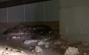 Hallan 45 serpientes debajo de una casa de West Texas. FACEBOOK