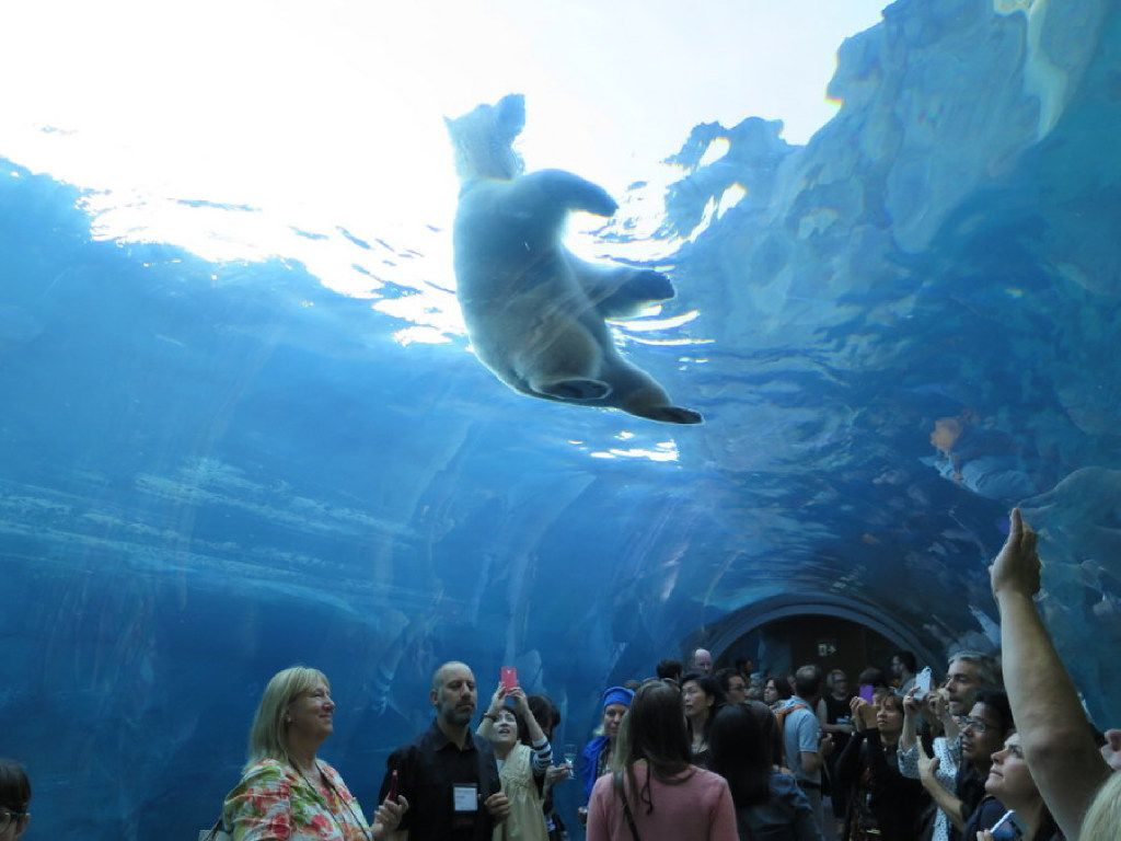 The Journey to Churchill at the Assiniboine Park Zoo in Winnipeg is a wonderful way to learn about polar bears and see them up close.