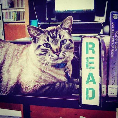 Browser is the resident cat at the White Settlement Public Library.