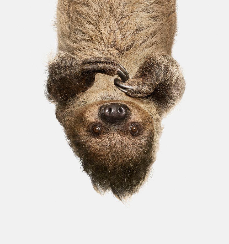 'Upside Down Sloth' from Animal Kingdom