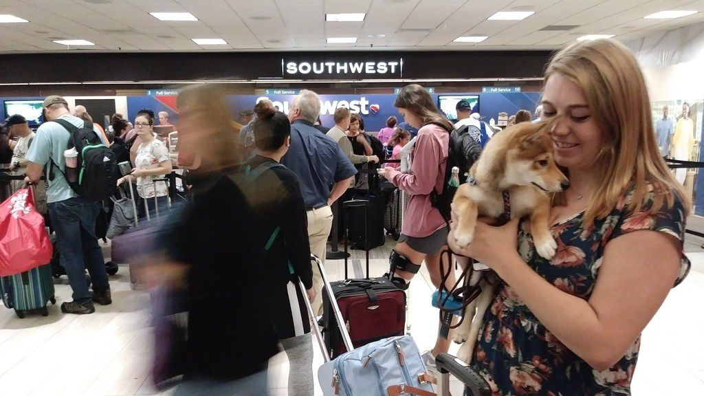 Jenni Point, who moved to Tampa two months ago, said she thought it would be cool to see a storm like Irma and planned to stay with friends. Her mother thought otherwise and bought a plane ticket so that Point and puppy Cleo could fly back to Ohio.