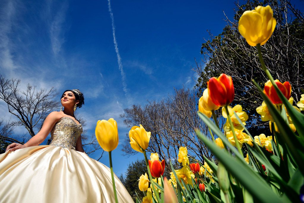 Hannah Grañado, 14, wears a quinceañera dress for a portrait session during Dallas Blooms at the Dallas Arboretum in March.