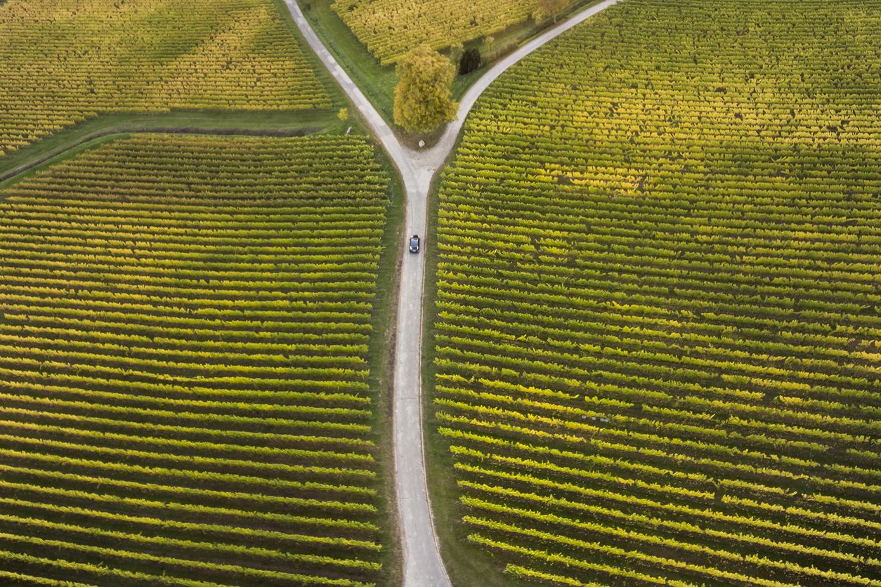 Aerial view of autumnal vineyards and fork in the road