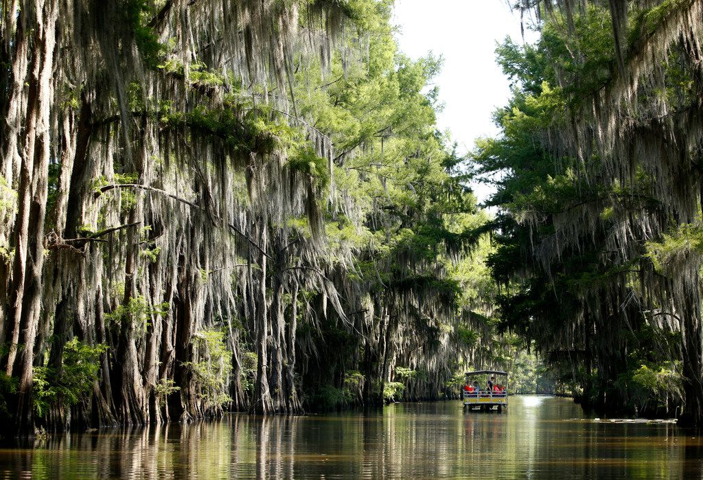 A barge from Mystique Tours slipped through one of the many channels on Caddo Lake in Uncertain, Texas, on June 26, 2018.