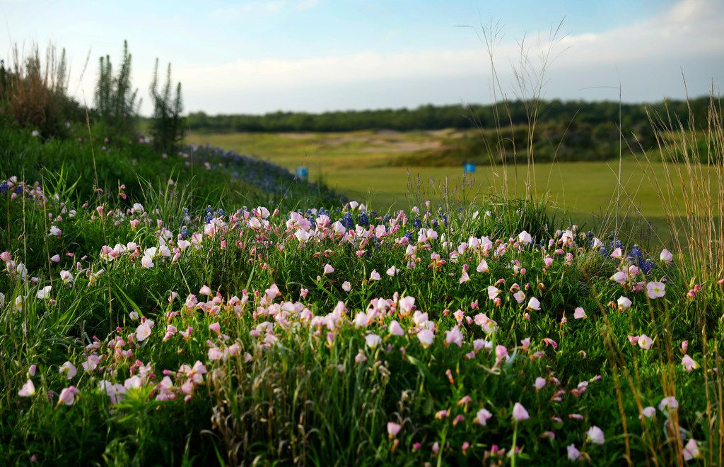 Wildflowers populate a sandy mound near the first tee box at the new Trinity Forest Golf Club in Dallas.