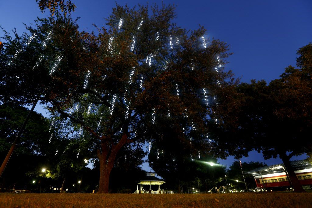 A newly lit tree stands in Haggard Park in observance of Earth Day.