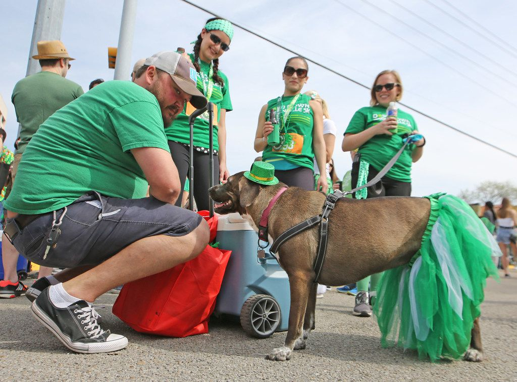 Blake Higginbotham, left, dresses his dog Ave for the occasion as they await the start of the parade during the Dallas St. Patrick's Parade & Festival along Greenville Avenue in Dallas on Saturday.