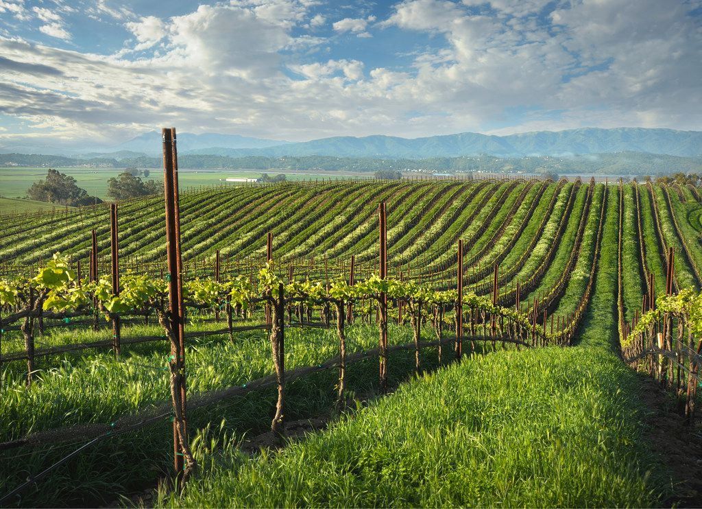 Rodney Strong Vineyards' first  Petaluma Gap  label will appear on bottles of its 2017 Blue Wing Vineyard chardonnay and pinot noir wine sent to wine club members in March 2019. (Rodney Strong Vineyards)