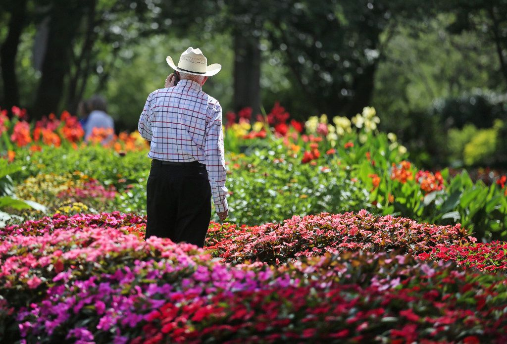 Phil Huey surveys a trial bed during the Plant Trials Field Day at the Dallas Arboretum and Botanical Garden in Dallas.