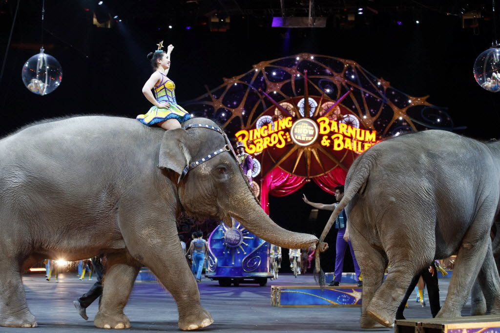 Concerns from animal-rights activists and shifting views about the use of elephants in the circus led to Ringling Bros.' decision.