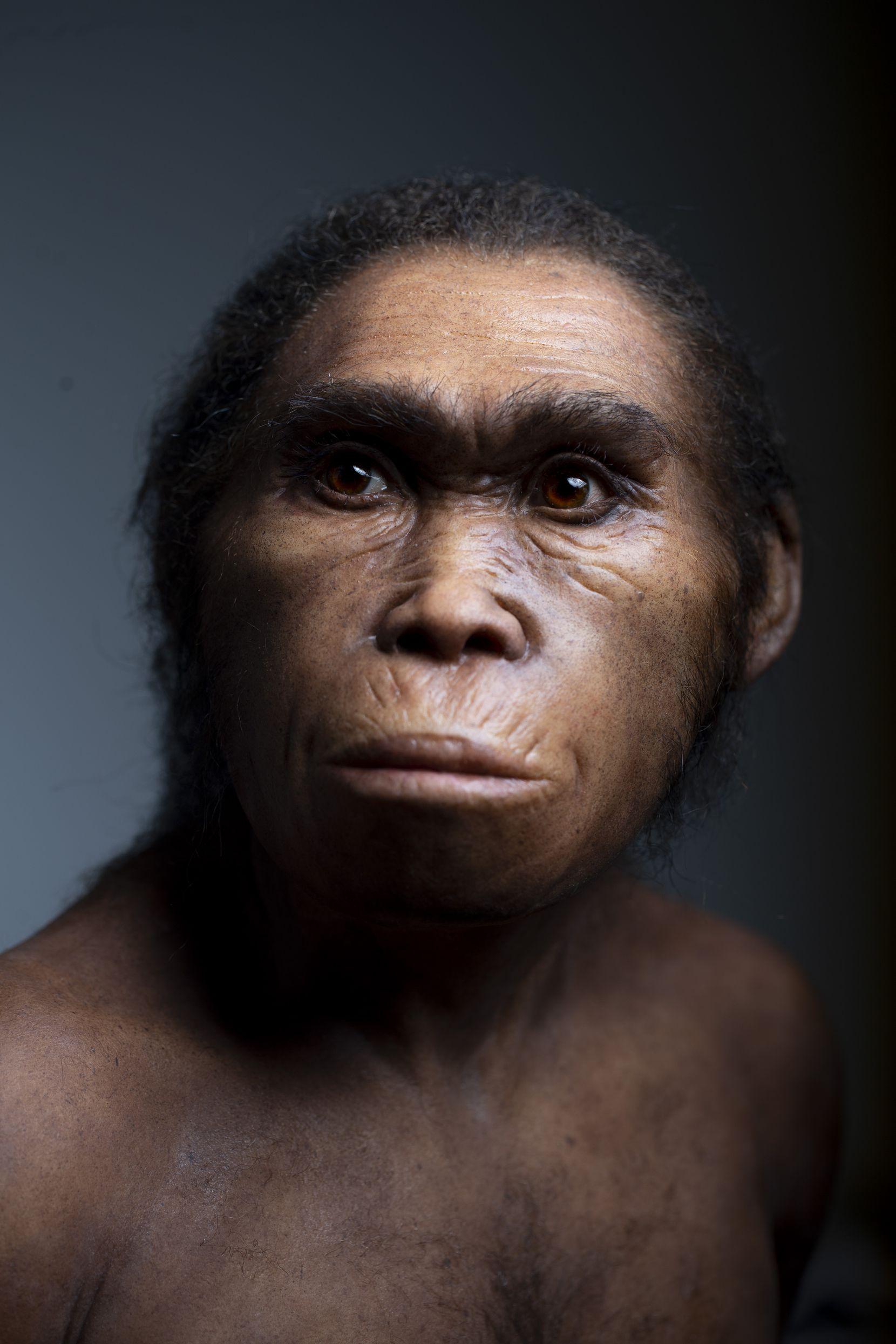 An artistic recreation, by paleoartist Elisabeth Daynès, of Homo naledi.
