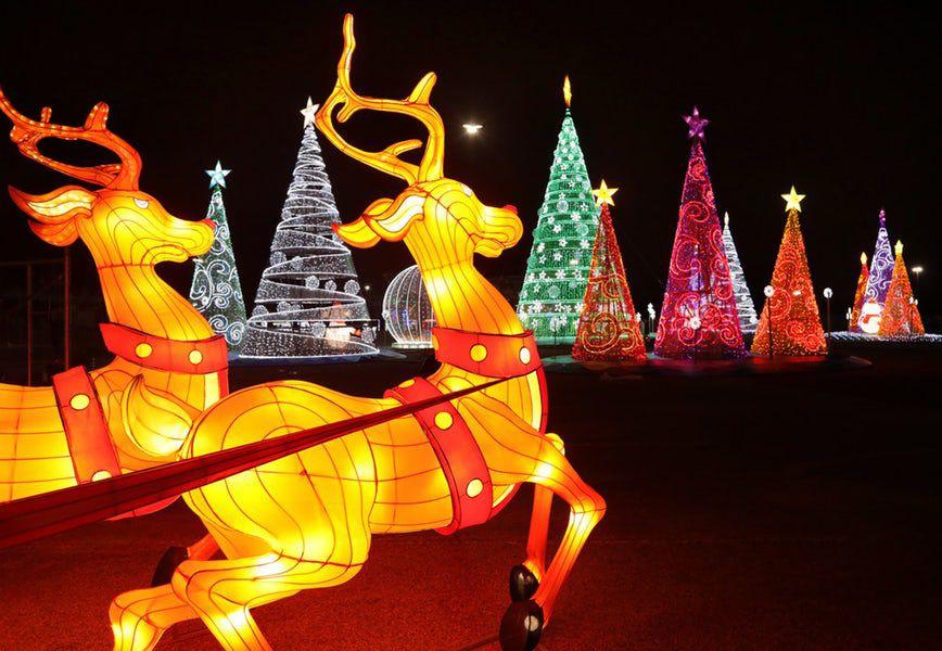 Encuentra diferentes opciones para ver luces navideñas esta temporada en Dallas y Fort Worth. Foto DMN