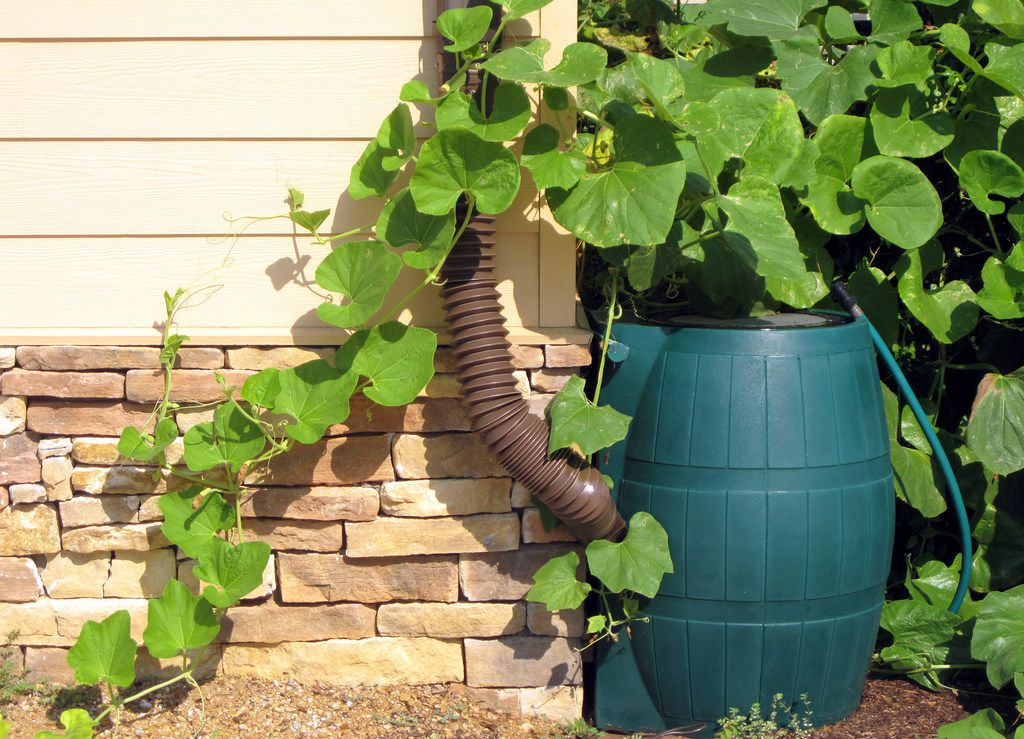 A rain barrel conserves water.