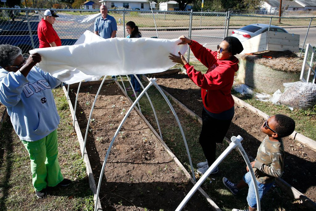 Volunteers Florence Hawkins-Criss, (from left) Jason Redick, Daniel Cunningham, Mayra Fierro, Dani Alexander and D.J. Williams put up a garden cover using PVC pipe at Sunny South Community Garden in Dallas.