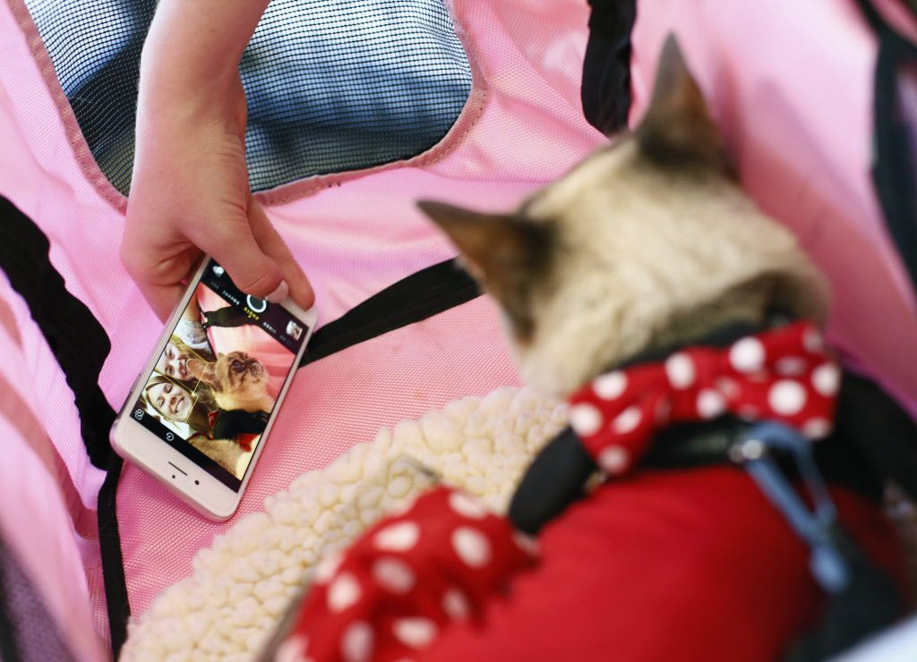 Kailey Warren (left) and Sharleen Flowers, both from Allen, Texas have a selfie taken with Sauerkraut, the famous rescued cat at Cat Connection the first cat cafe in Dallas August 8, 2015.