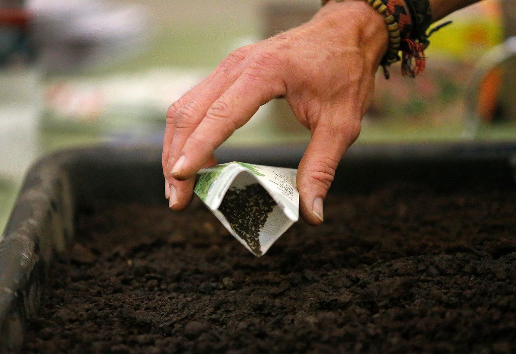 Garden adviser Brieux Turner demonstrates how to plant seed during  a class at North Haven Gardens in Dallas on Jan. 27.