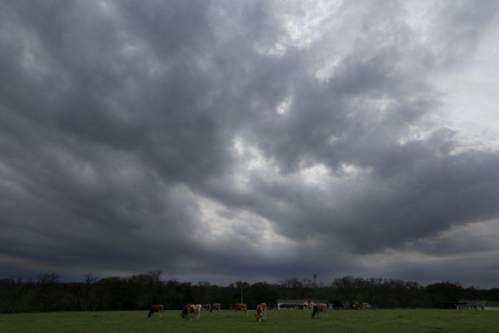 Dark clouds are seen above Lavon Farms in Plano, Texas, Saturday, March 11, 2017. (Jae S. Lee/The Dallas Morning News)