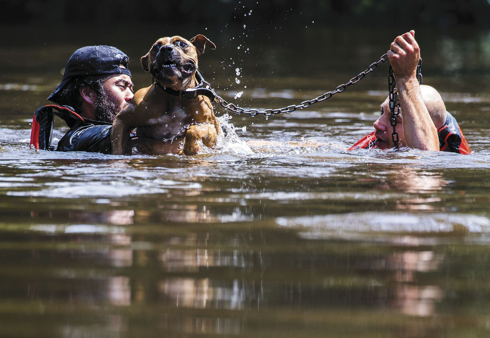 Marine Corps League member Jeff Webb (left) of Montgomery and rescue diver Stephen Bradshaw of South Carolina save a dog that had been left chained to a porch in Lumberton as Harvey floodwaters rose.