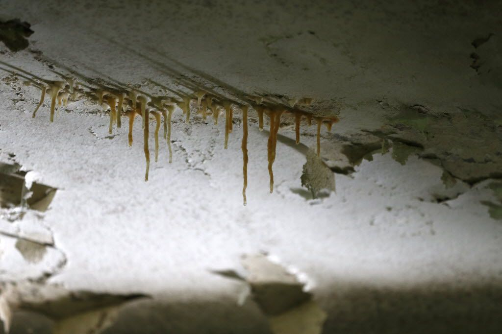 A stalactite, which is produced by precipitation of minerals from water dripping through the ceiling, forms inside the former children's ward and school, unoccupied since 1985, at the Terrell State Hospital in Terrell, Texas on April 21, 2016. (Rose Baca/The Dallas Morning News)